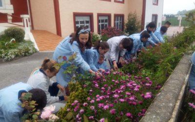 VI día internacional de fascinación por las plantas